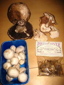 the mushrooms I used