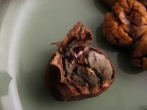 bad chestnut!